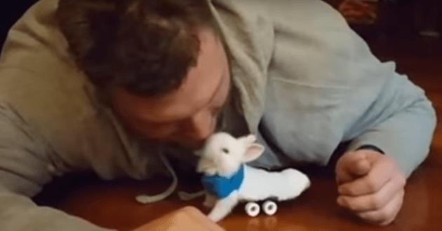 Un jeune lapin paralysé réapprend à se déplacer grâce à un petit skateboard ! (Vidéo du jour)