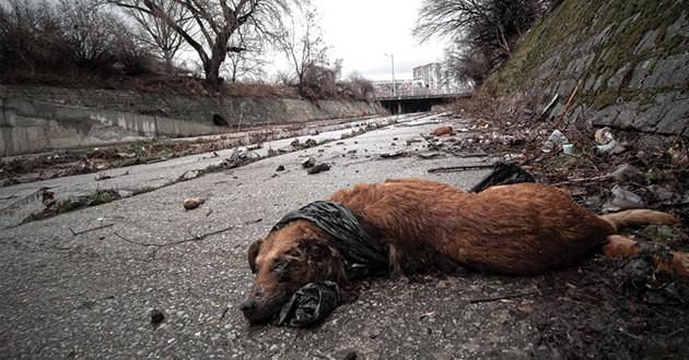 chiens morts empoisonnés