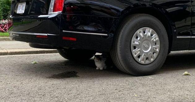 Larry le chat caché sous le chat de donald trump