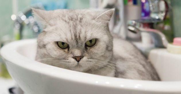 chat dans un lavabo