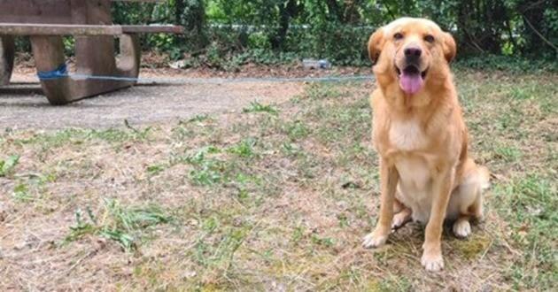 Le chien Caramel