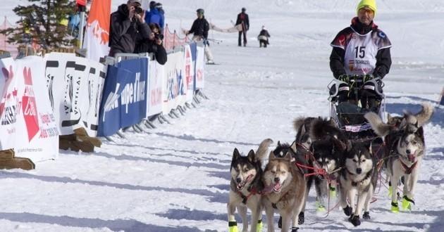 Lekkarod chiens de traineaux
