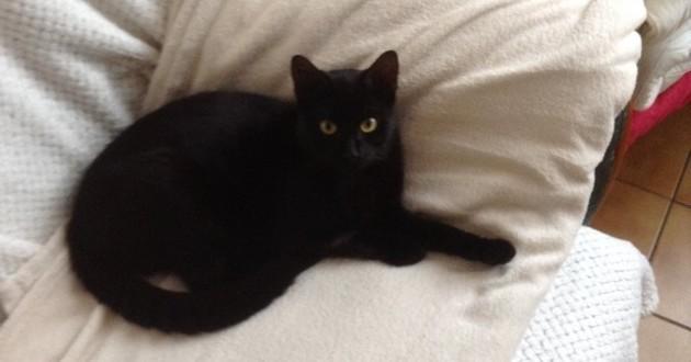 Léo le chat noir tué par balle