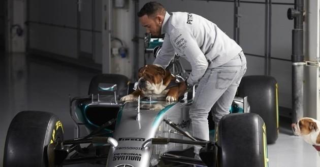Lewis Hamilton et ses chiens
