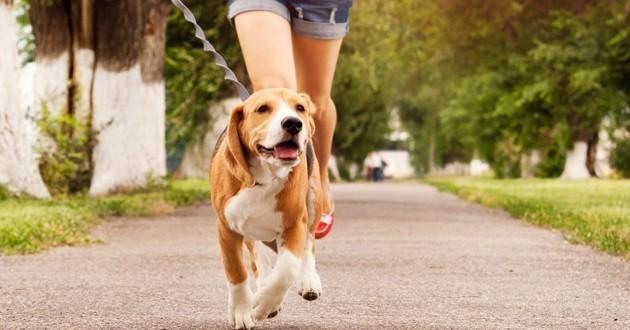 chien qui court avec son maître