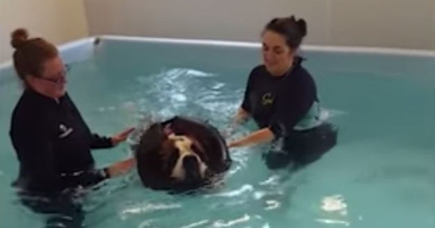 chien nage