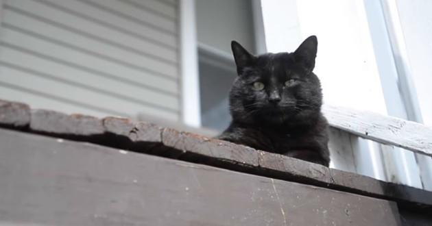 chat noir fenêtre