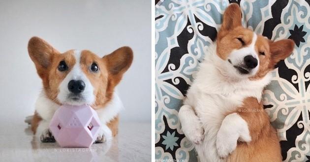 Loki le chien star d'Instagram