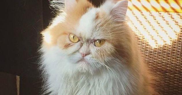 Louis, le nouveau Grumpy Cat