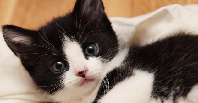 Bekannt Ils retrouvent leur chaton avec les pattes avant arrachées - Cause  MJ39
