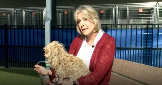 femme qui porte son chien dans ses bras