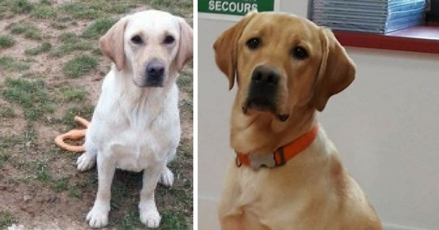 Lully et Natcho chiens guides d'aveugles volés