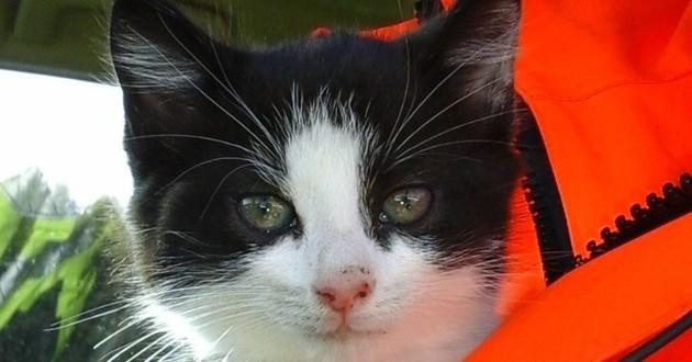 chaton noir et blanc