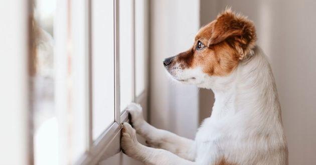 fin des vacances préparer son chien au retour à la vie quotidienne