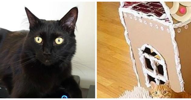 chat maison pain d'épice