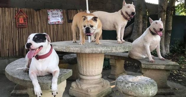 maison de retraite pour chiens