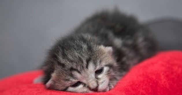 chaton malade