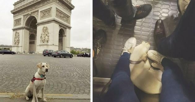 chien ville paris