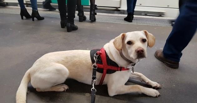 Malinka chien RER voleur