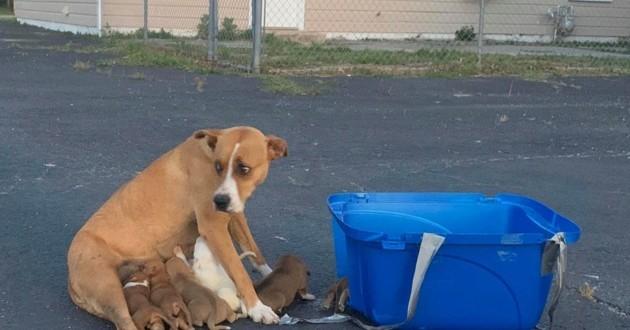 chienne abandonnée sur le parking