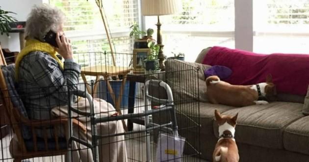 mamie dans une cage chiens canapé