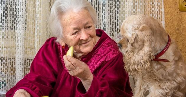 chien retraité personne âgée senior