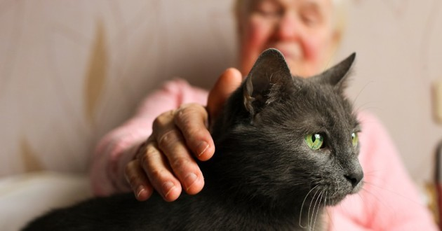 grand-mère avec un chat