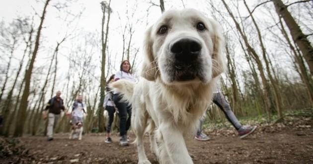 course marche solidaire ecole chiens guides paris