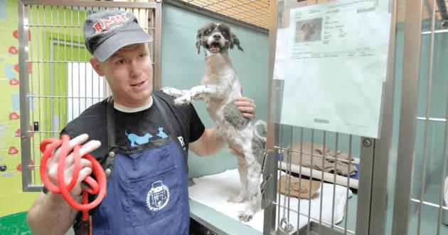 Il offre une beauté aux chiens de refuge pour les aider à retrouver un foyer