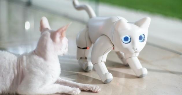 MarsCat le chat bionique