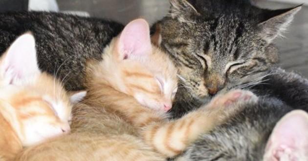 vieux chat sauvage et chaton