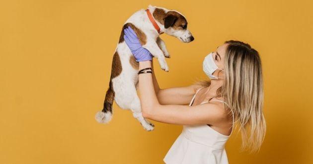 chien et une maîtresse qui porte masque et gants