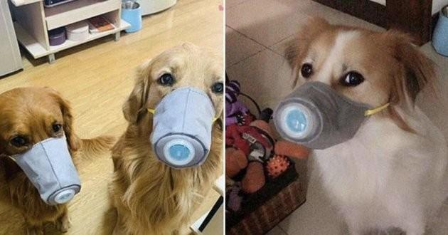 masque pour les chiens
