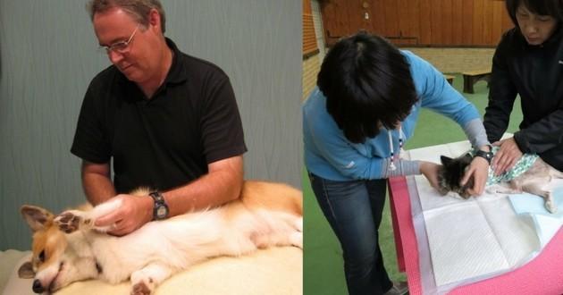 conférence chien zen massage bien-être