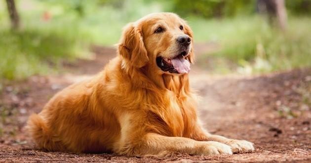 Capacité mémorielle des chiens