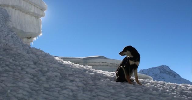Mera la chienne qui gravi une montagne de 7000 m d'altitude