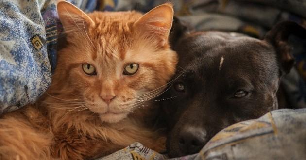 nettoyer les yeux de son chien ou chat