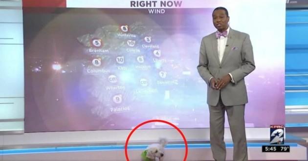 chien blanc météo
