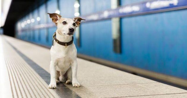 chien quai métro