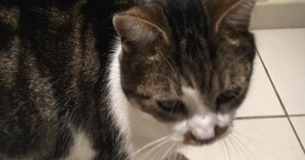 En Mayenne, cet étudiant retrouve son chat un an après sa disparition