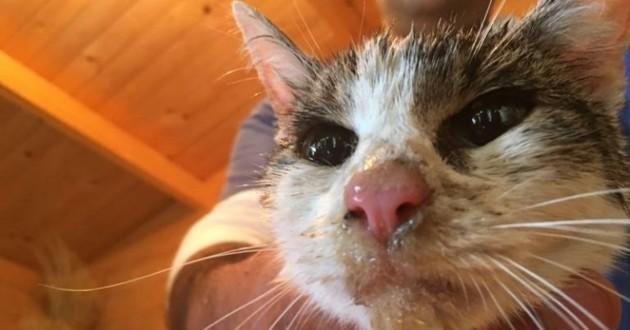 Chat miraculé du séisme en Italie