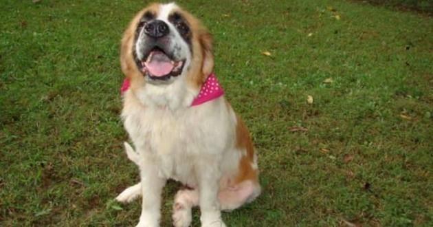 Missy, le chien qui a retrouvé sa famille