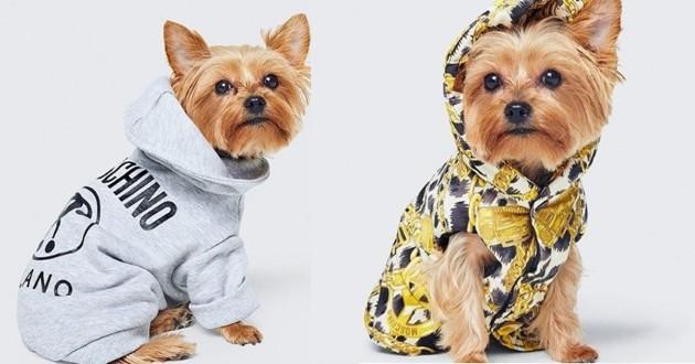 h&m vêtements pour chiens moschino
