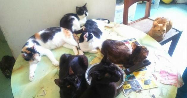 chats montereau