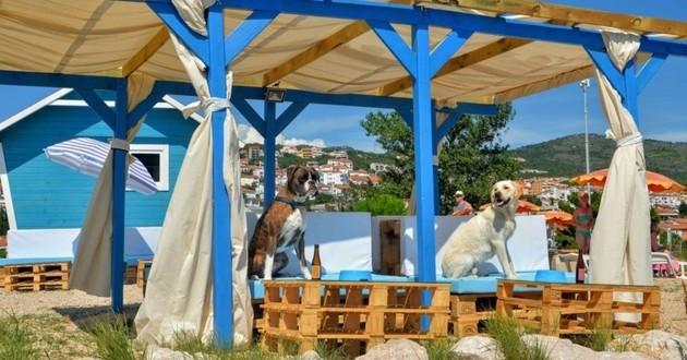 plage pour chiens croatie
