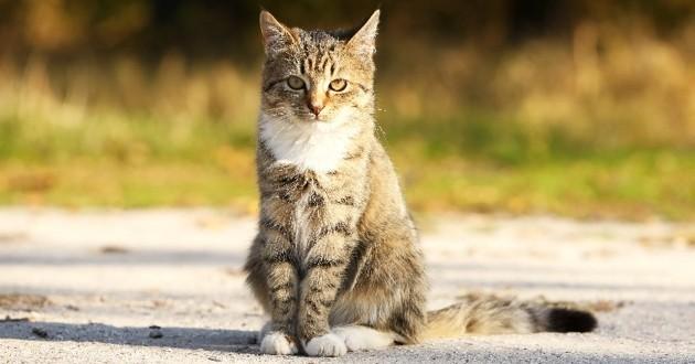 un chat retrouve sa maison après 5 ans d'errance