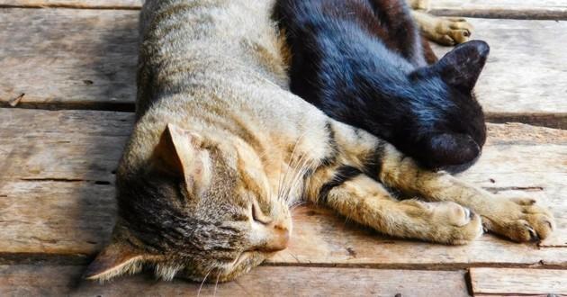 chien chat âgé mort