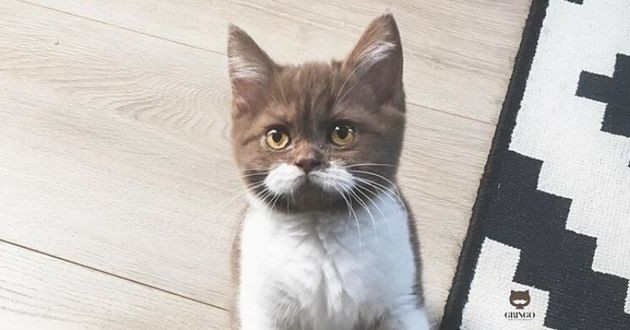 un chaton avec une moustache blanche