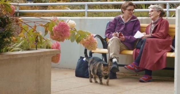 chat maison de retraite