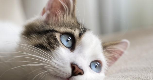 Un festival dédié aux chats aura bientôt lieu !